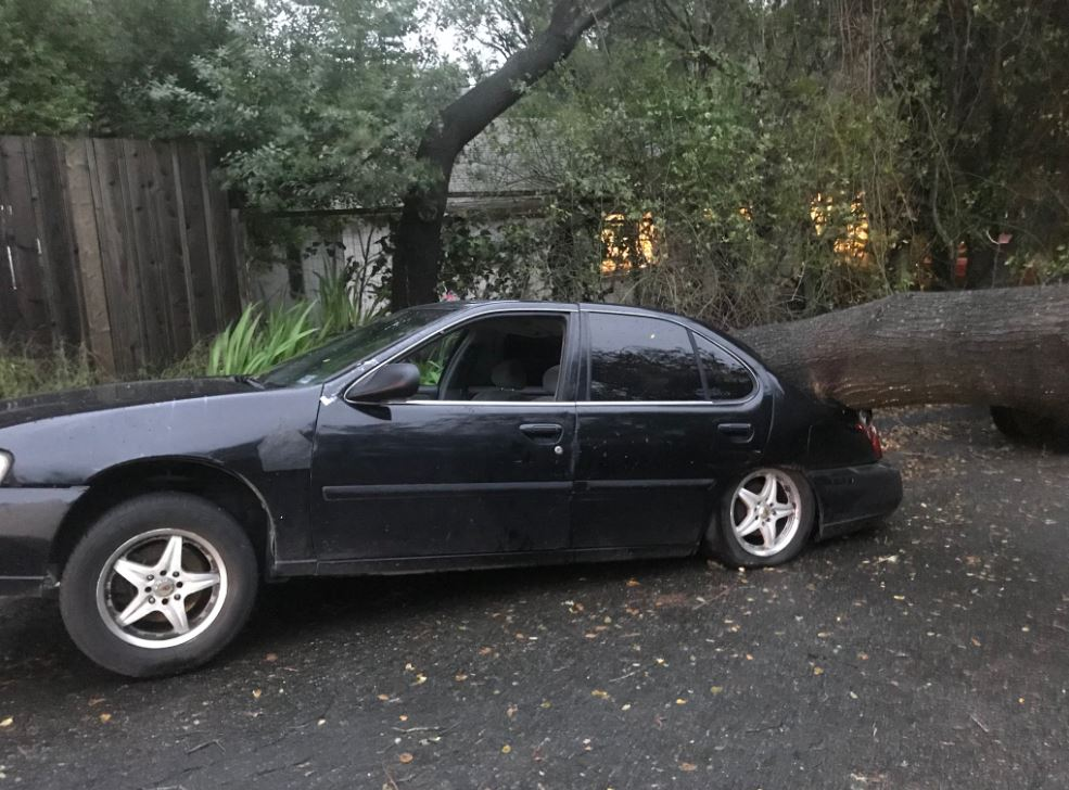 A powerful storm brought down power lines and trees all around the Bay Area.