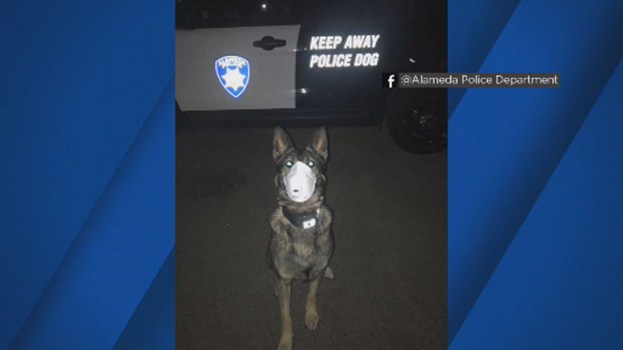 This image shows Argo the Police Dog wearing a mask to remind people to protect their animals during this time of extremely poor air quality.