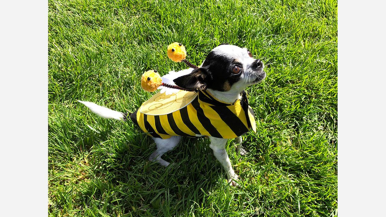 Alice came dressed as a bee on Saturday. | Photos: Teresa Hammerl/Hoodline
