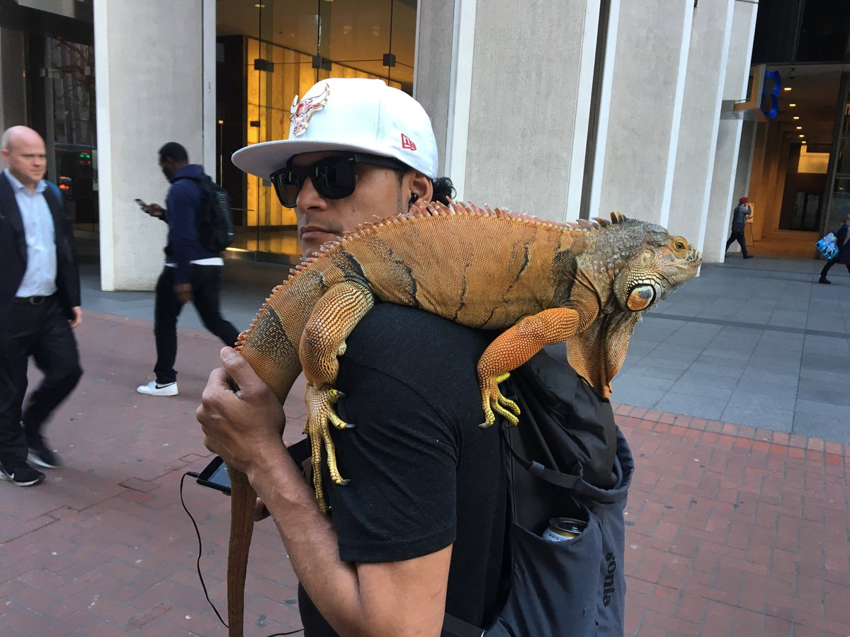 There's something you don't see everyday. Kirra and his iguana leaving Embarcadero BART. Photo: Eric Thomas/Twitter