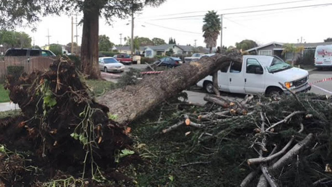 A tree falls on a van in Hayward, Calif. on Sunday, December 13, 2015.
