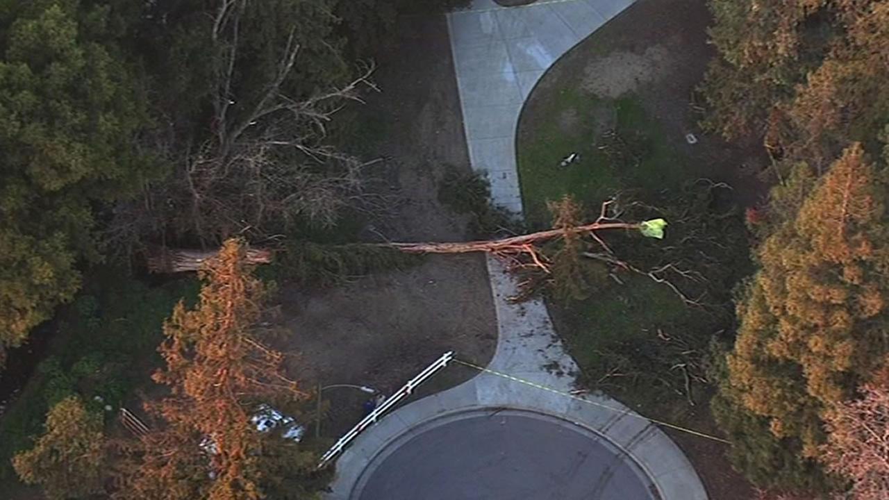 tree fell in Berryessa Creek Park