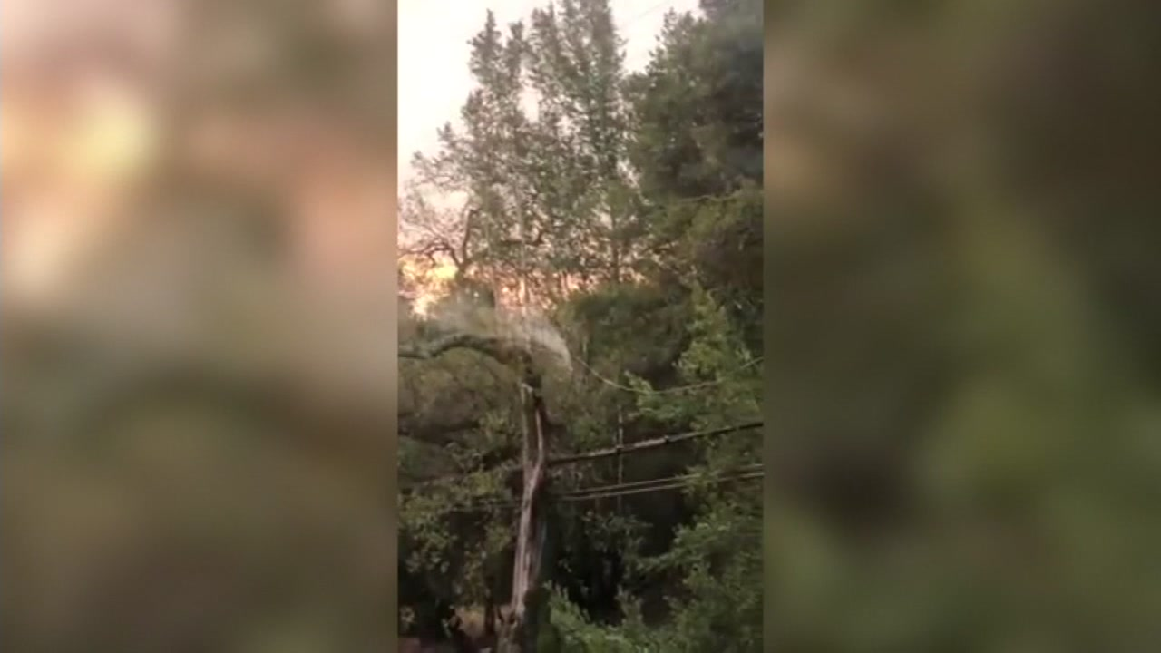 Smoke is seen rising from a tree after a power line fell in Sonoma, Calif. on Monday, Dec. 3, 2018.