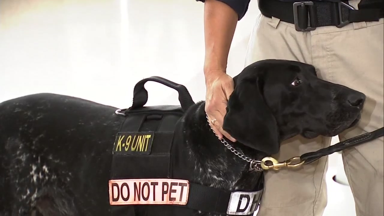 This undated image shows an airport police K9.