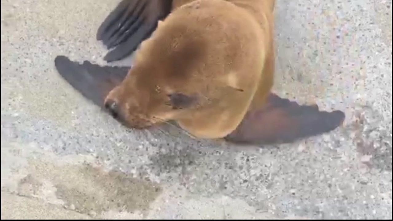 San Francisco police help rescue baby sea lion