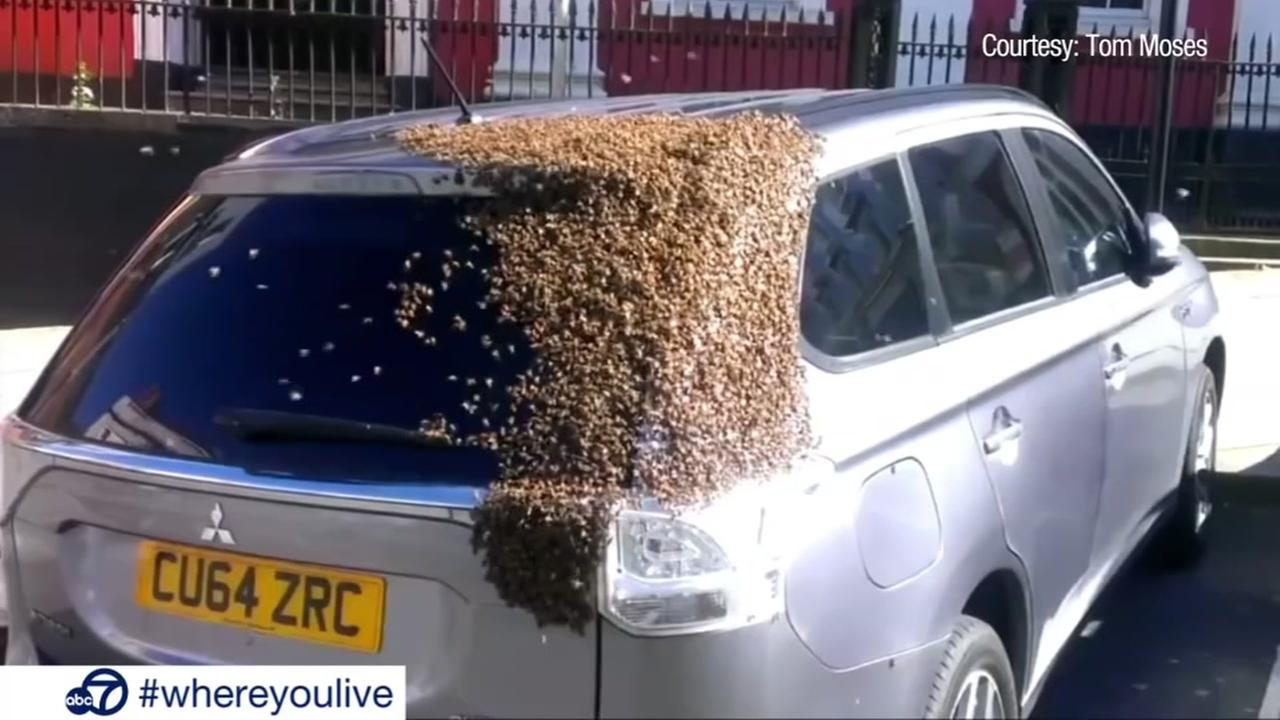 KNOW AND TELL: Swarm on car causes a buzz