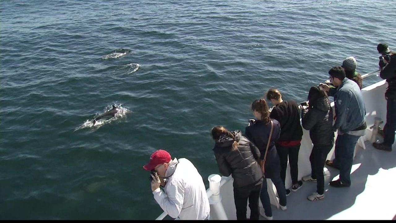 A crowd discovers marine wildlife as they cruise the Monterey Bay in this undated image.
