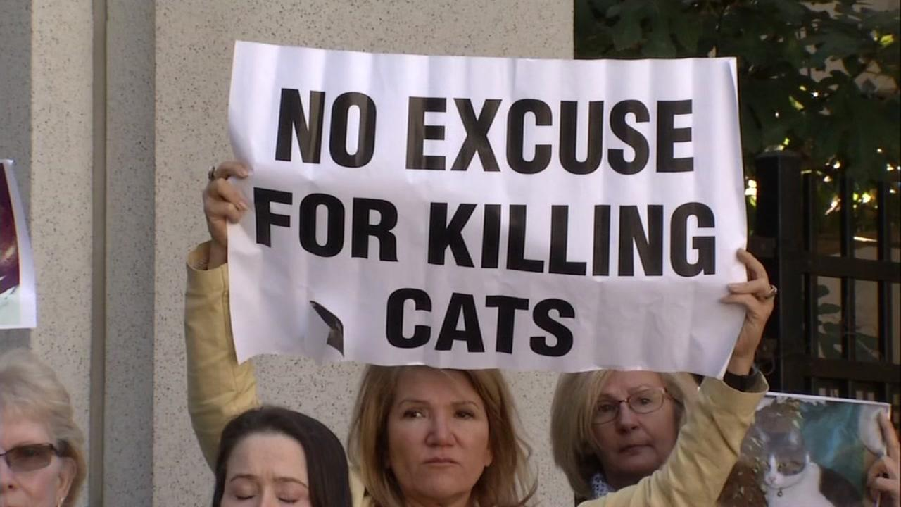A woman holds up a sign that reads: no excuse for killing cats in San Jose, Calif. on Tuesday, October 4, 2016.