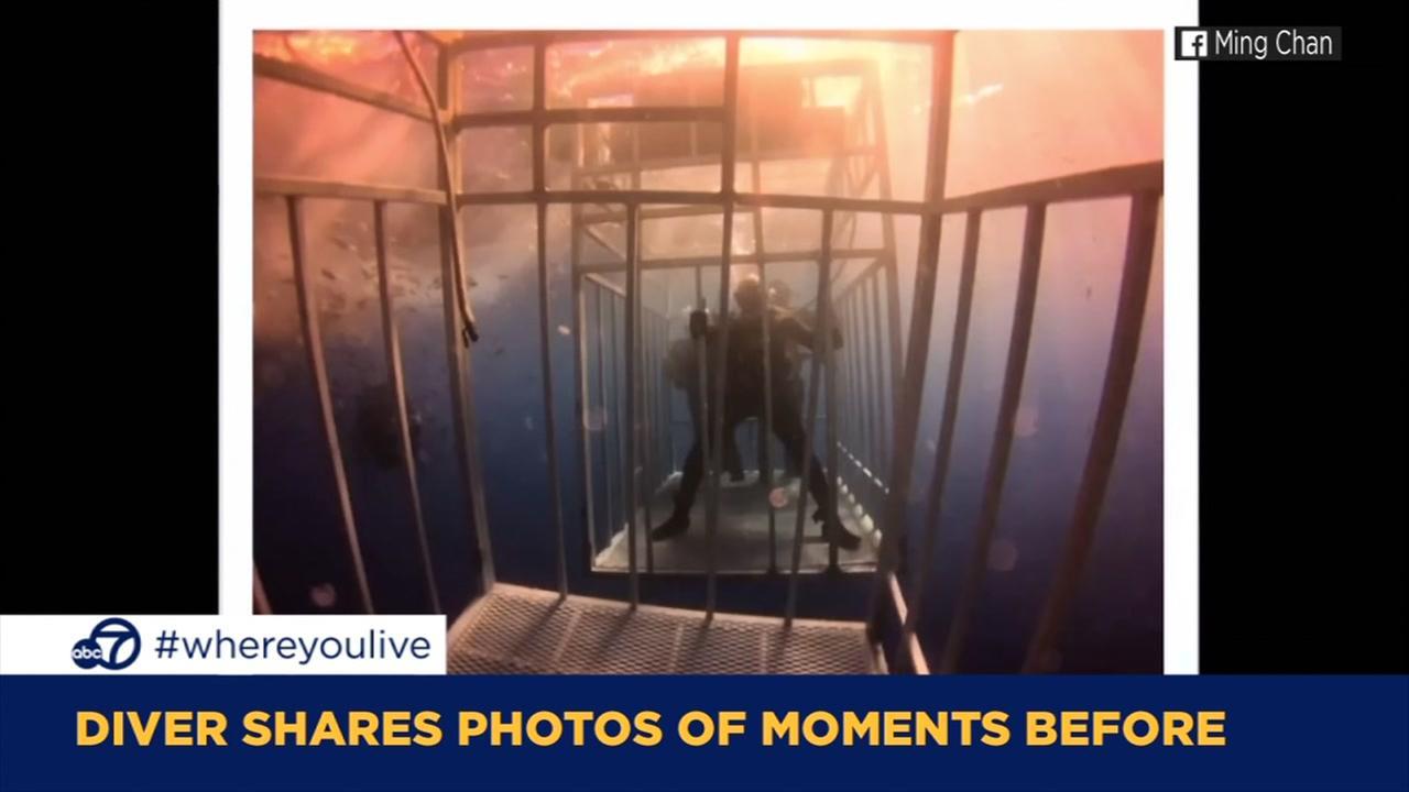 KNOW AND TELL: Diver shares photos of moments before shark encounter