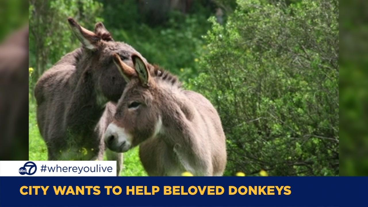 KNOW AND TELL: Palo Alto wants to help beloved donkeys