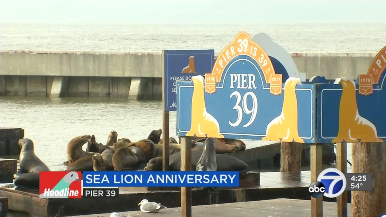Sea lion anniversary at Pier 39 tops weekend events in San Francisco