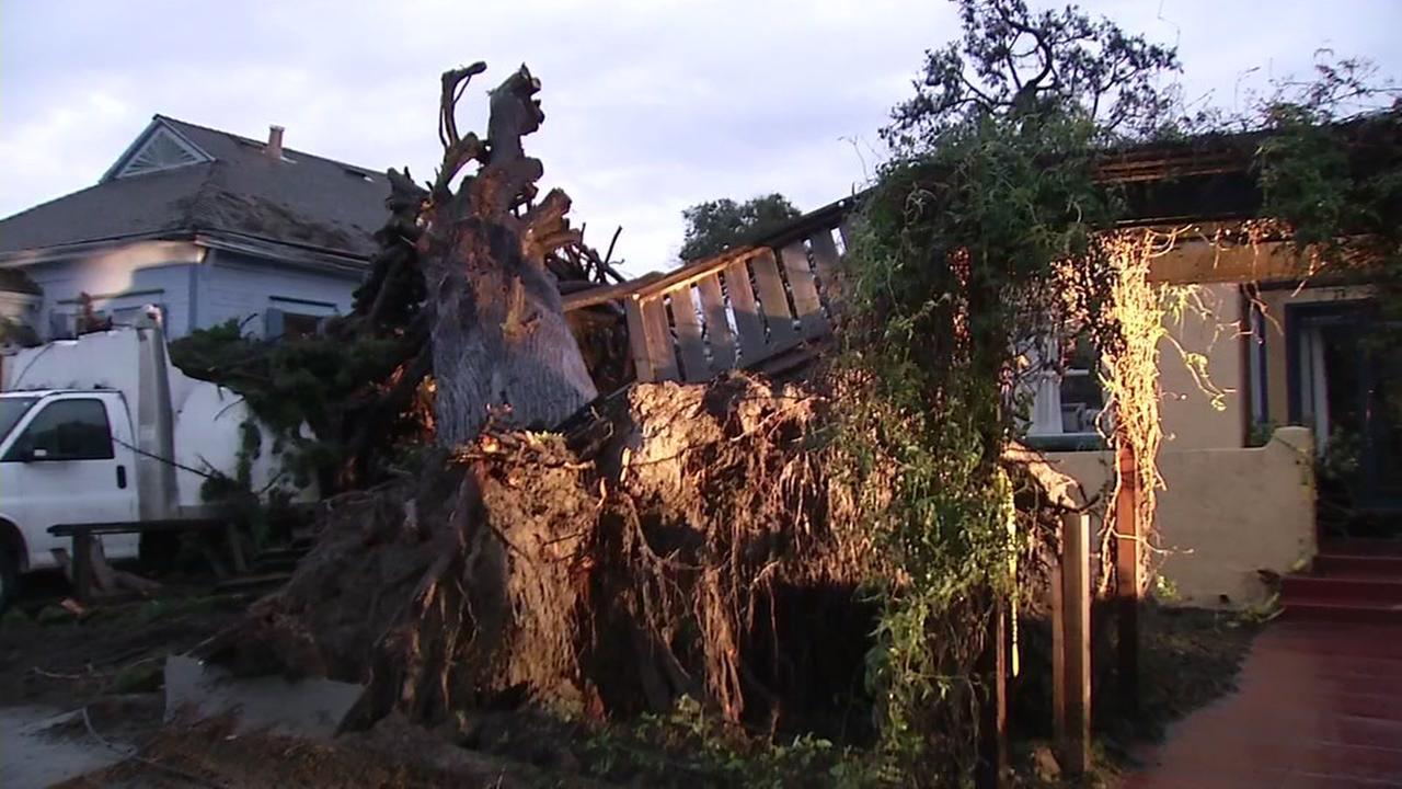 Fallen tree removed from Petaluma home