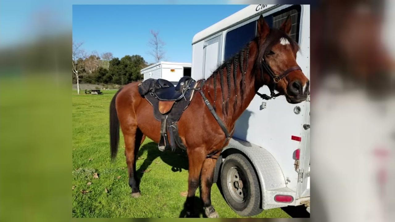 This is an undated image of Ben the horse, who was injured in the San Jose floods of 2017.