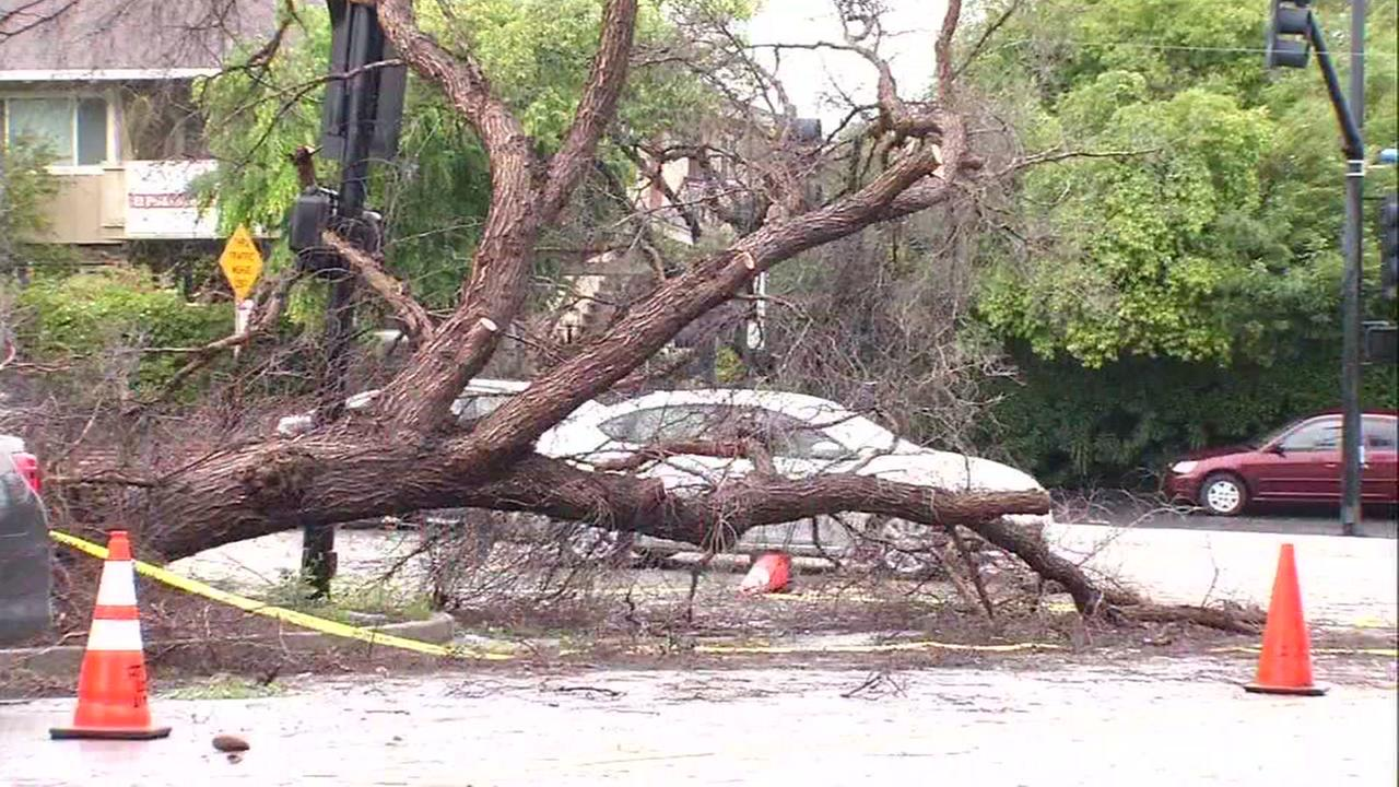 A downed tree is seen in the Los Altos, California area on Friday April 7, 2017.