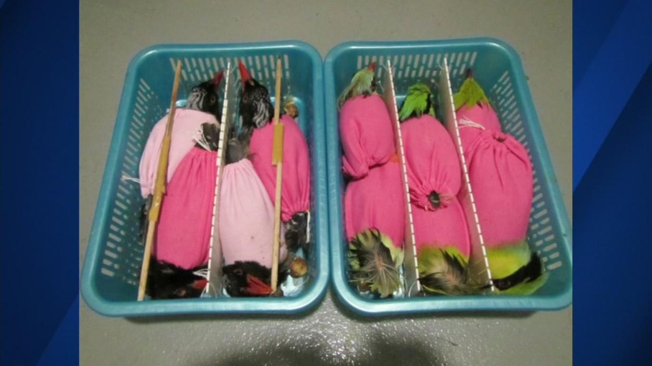 Man Arrested For Smuggling 93 Birds Into Us In Suitcase