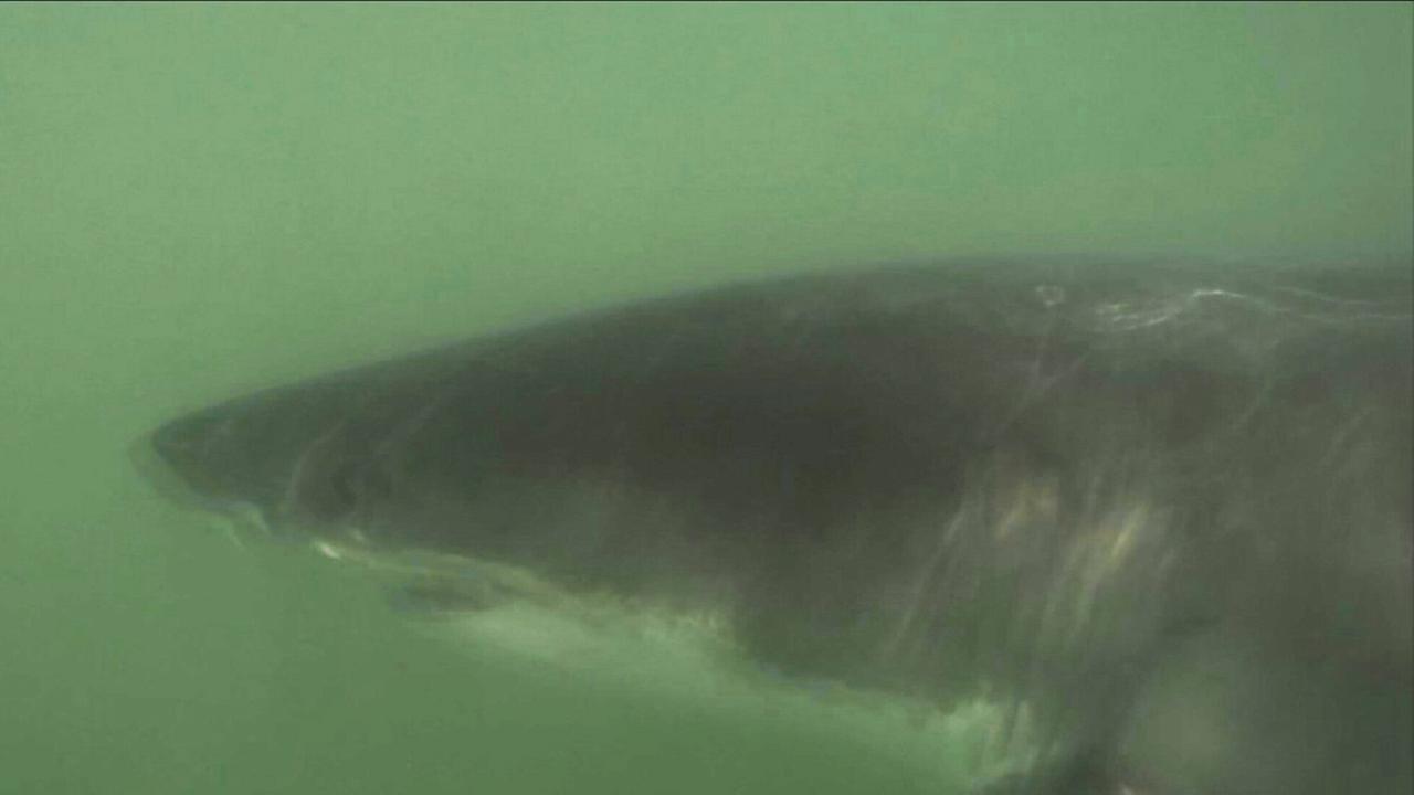 FILE -- Shark spotted off coast of Southern California coast