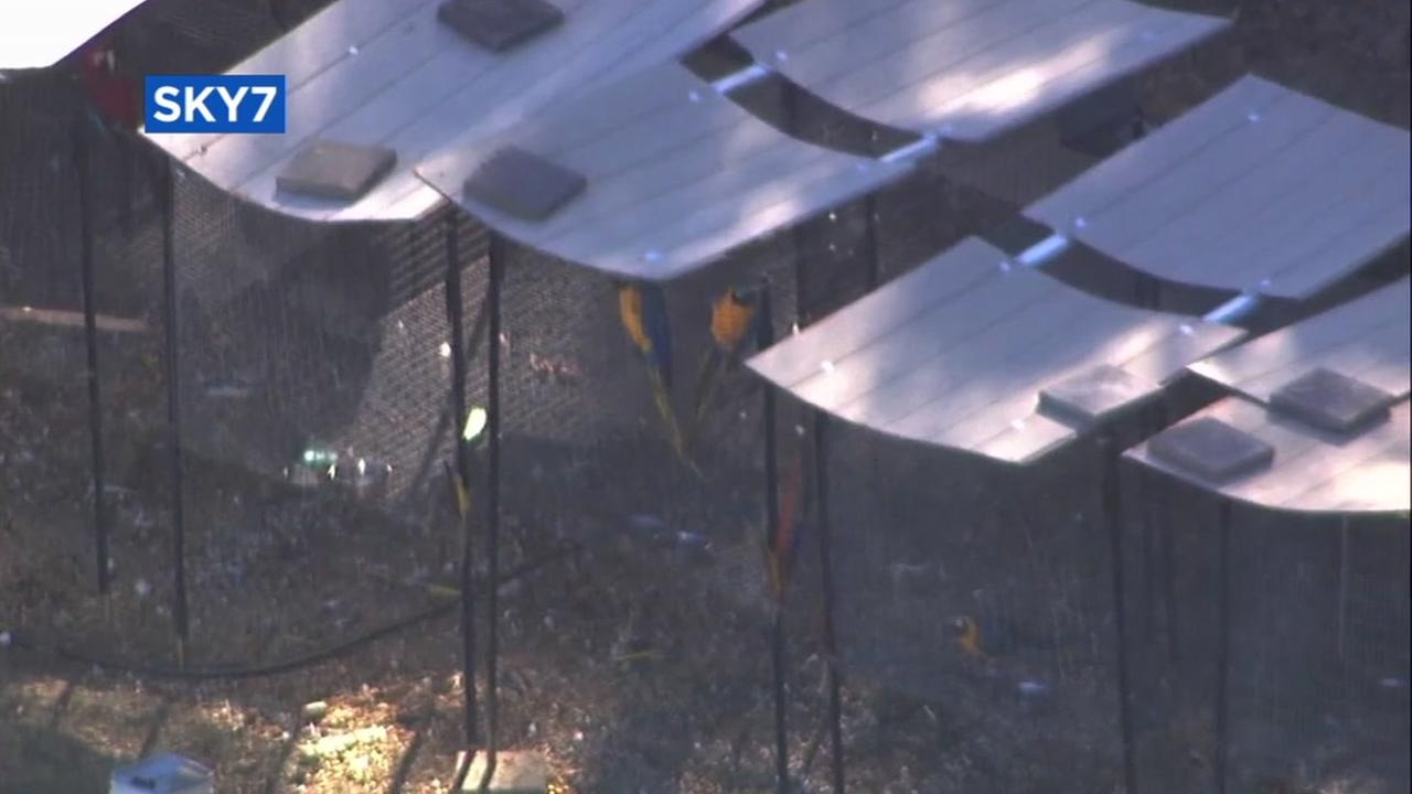 Noisy bird mill in Castro Valley becomes nuisance for residents