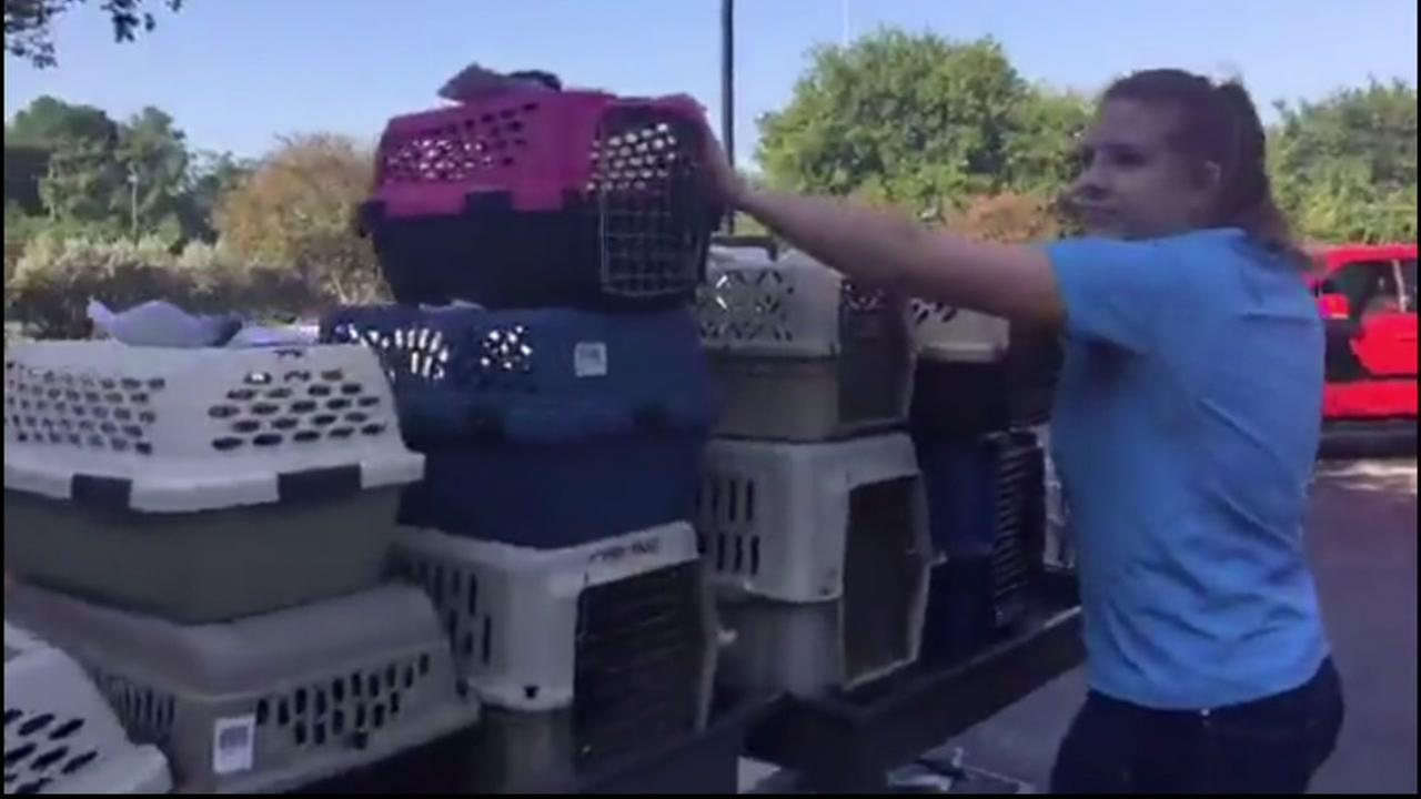Hurricane Harvey rescuers focus on reuniting stranded animal with owners
