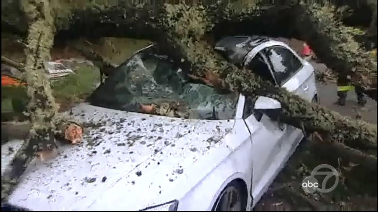 Driver rescued after two cars crushed by falling tree in San Francisco