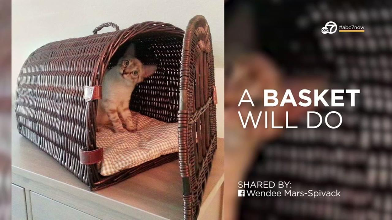 DIY: How to make a pet carrier in case of emergency