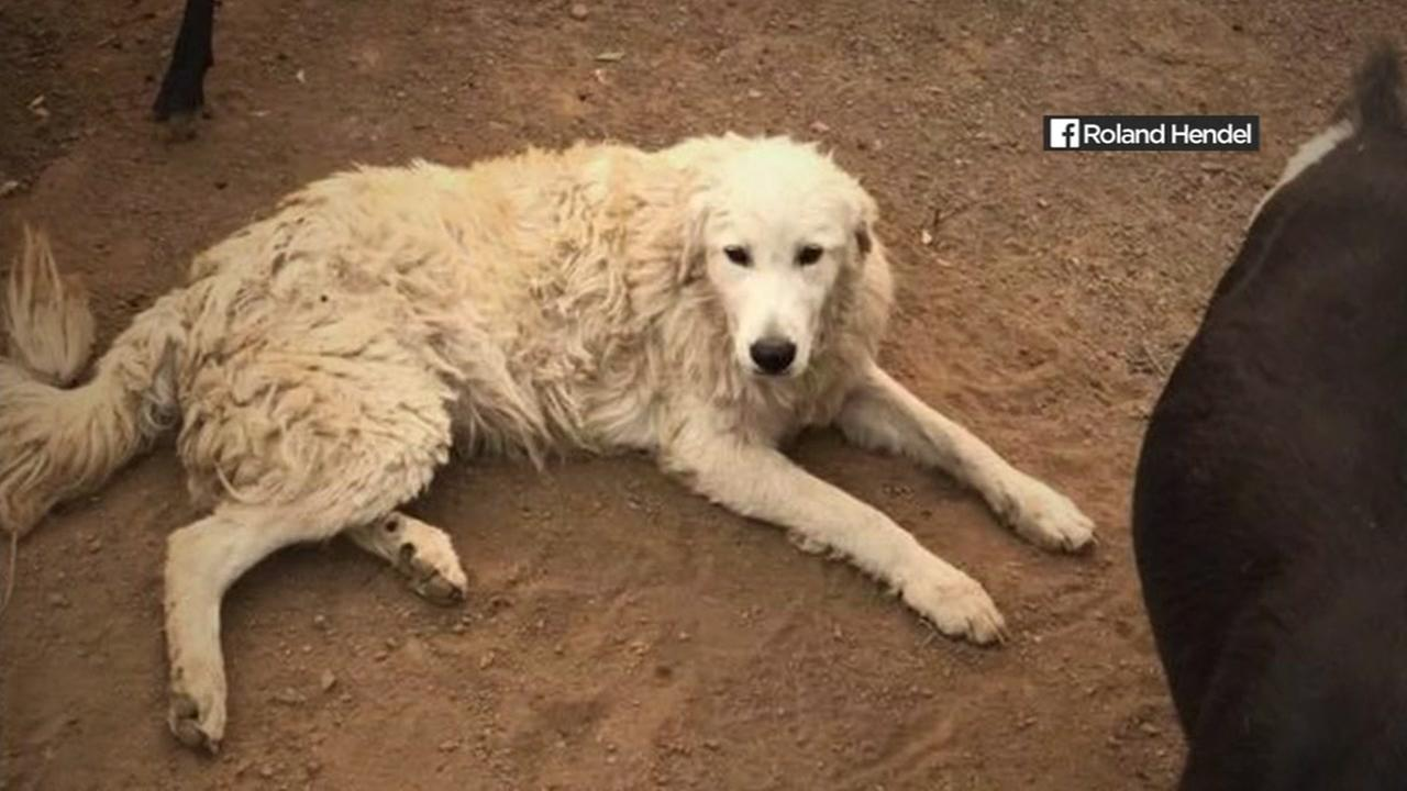 A dog that was reunited with a family after the North Bay Fires is seen in this undated image.