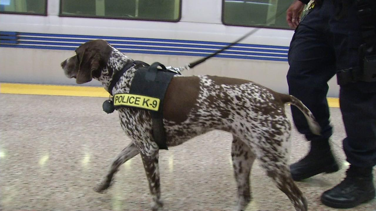 A police K-9 is seen patrolling a BART station in San Francisco on Monday, December 11, 2017.