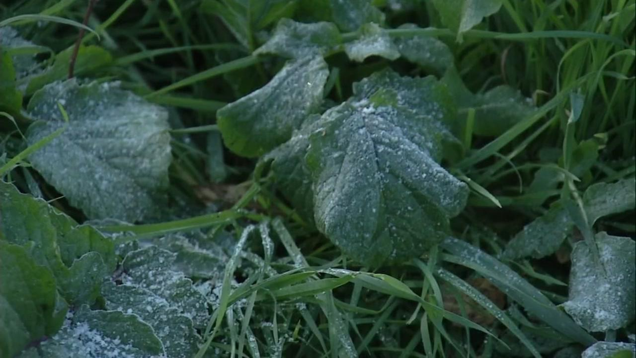 Frost is seen on plants in this undated image.