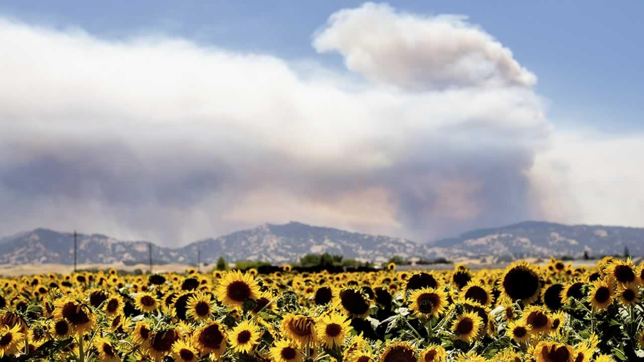 Smoke from a wildfire rises above sunflowers in Citrona, Calif., Sunday July 1, 2018.