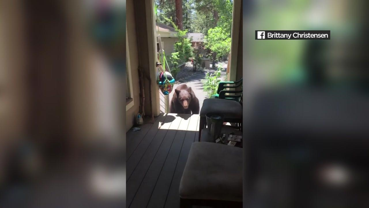 A bear is seen walking onto the porch of a home near Lake Tahoe on Saturday, July 14, 2018.
