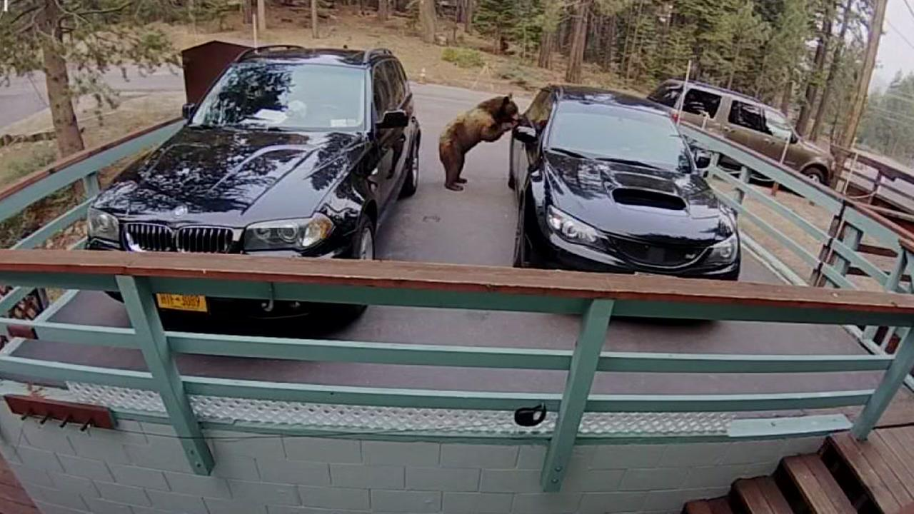 Bear breaks into car in Lake Tahoe.