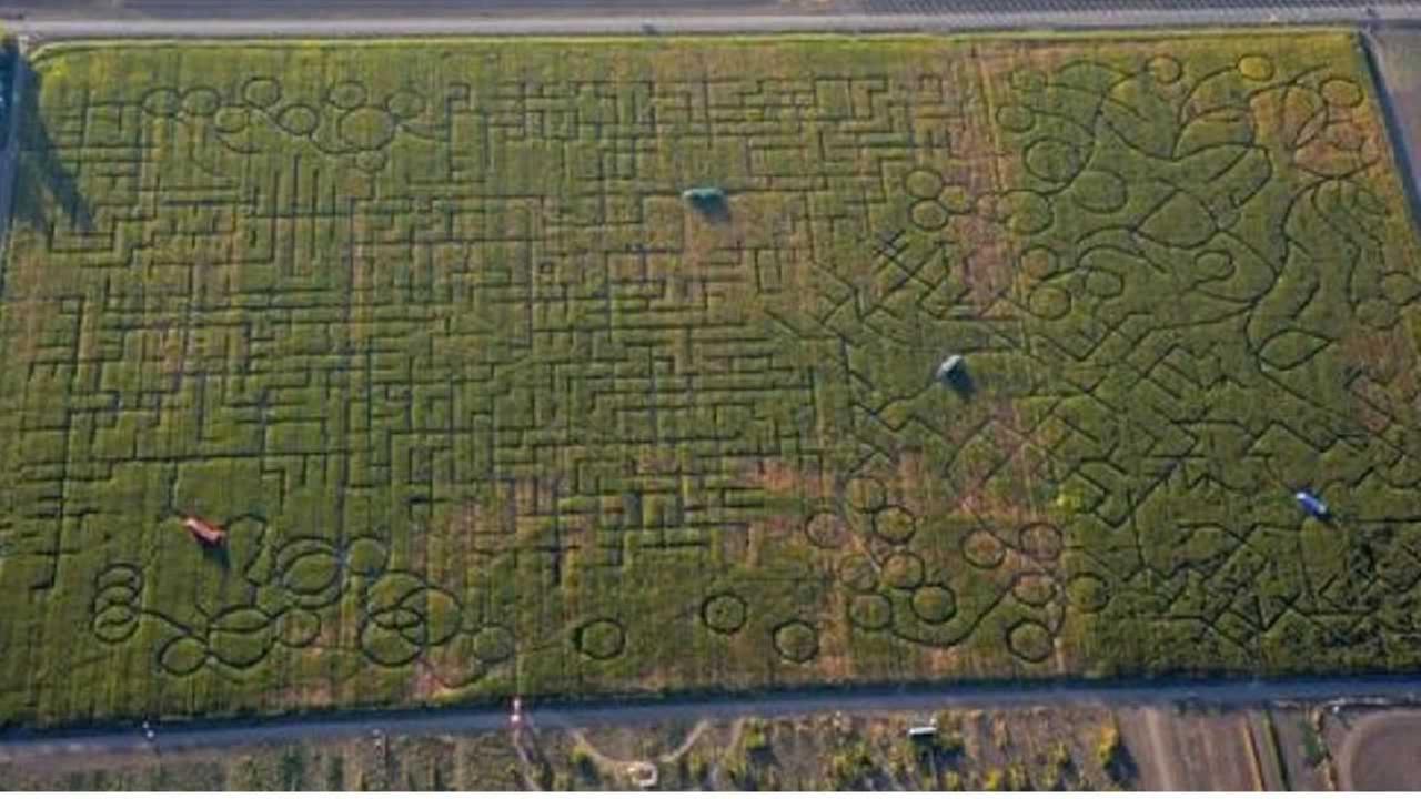 Cool Patch Pumpkins maze in Dixon, California