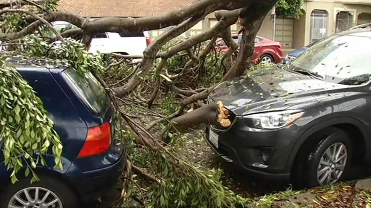 Tree falls on top of car in SFs Presidio neighborhood