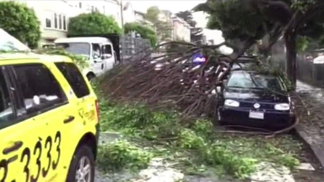 A large portion of a ficus tree fell on a cab at Oak and Broderick streets in San Francisco Sunday.