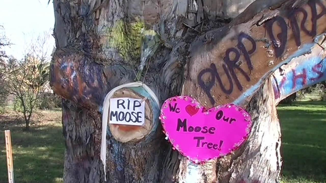 Napa moose tree vandalized