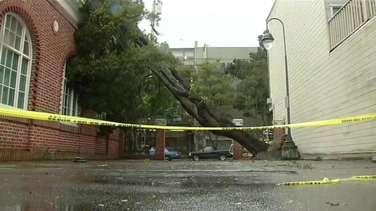 Large tree falls on San Franciscos Richmond District fire station
