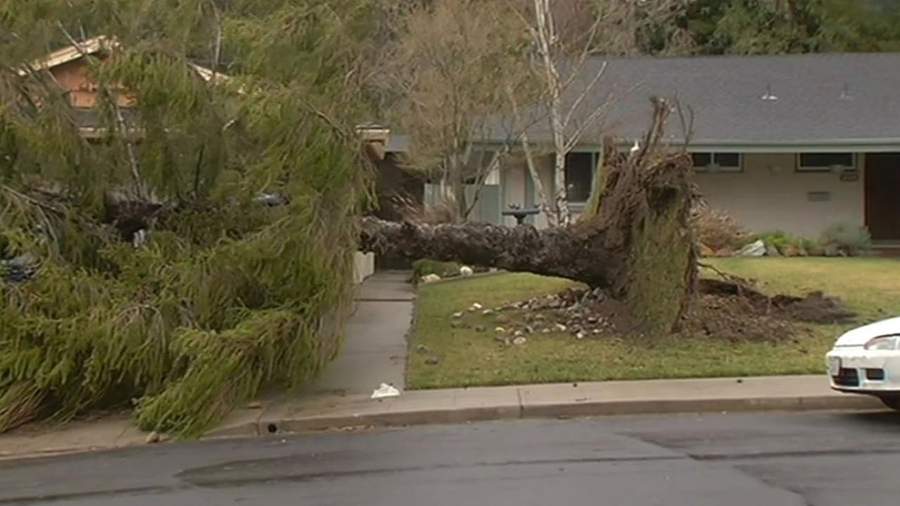 Tree toppled over