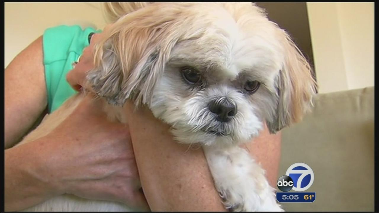 Dog Owner Says Injuries From Petco Grooming Session Led To 7 000 In
