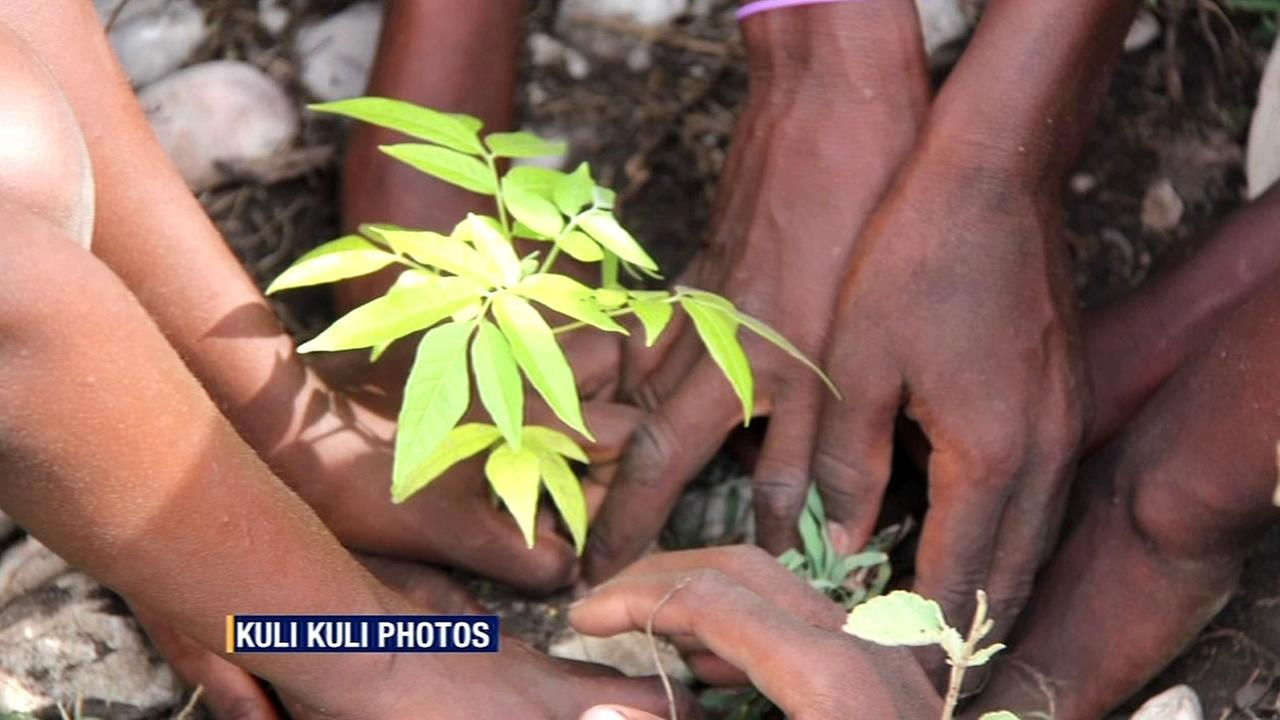 FILE - Moringa tree leaves are seen in this undated photo.