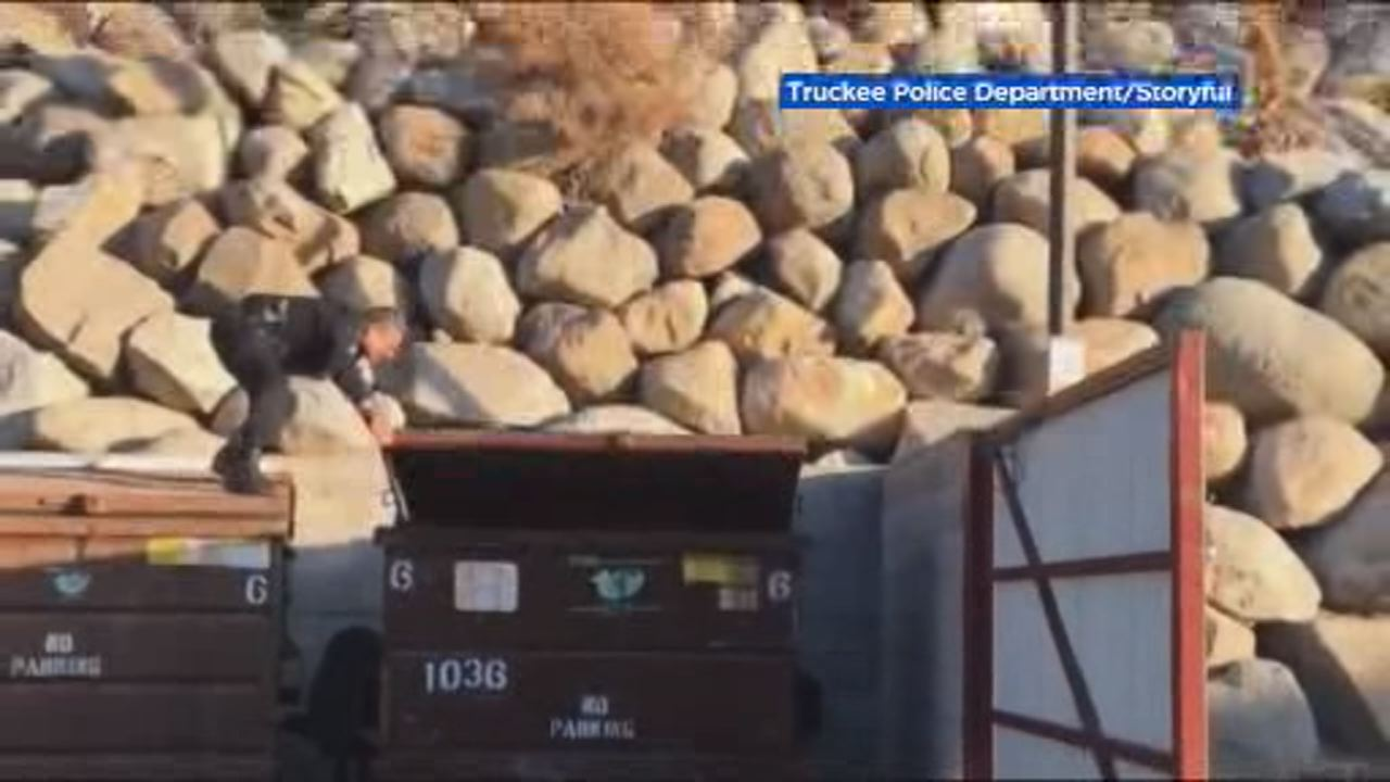 This image shows a Truckee police officer lifting a dumpster lid to rescue bear cub trapped inside on Nov. 16