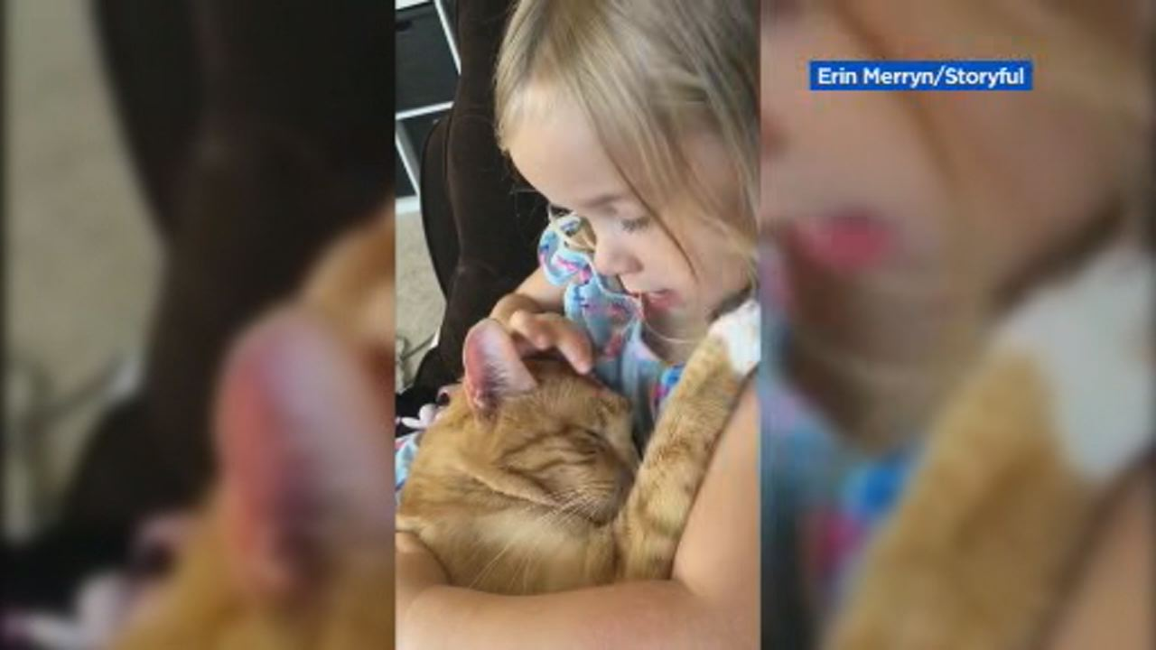 This image shows a 4-year-old girl singing a lullaby to her sleepy cat in Elgin, Illinois on August 20.