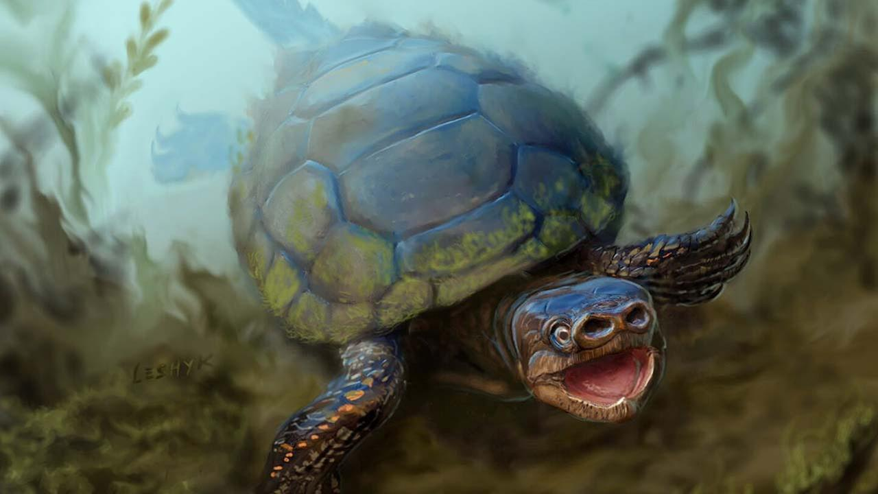 Pig-snouted turtle