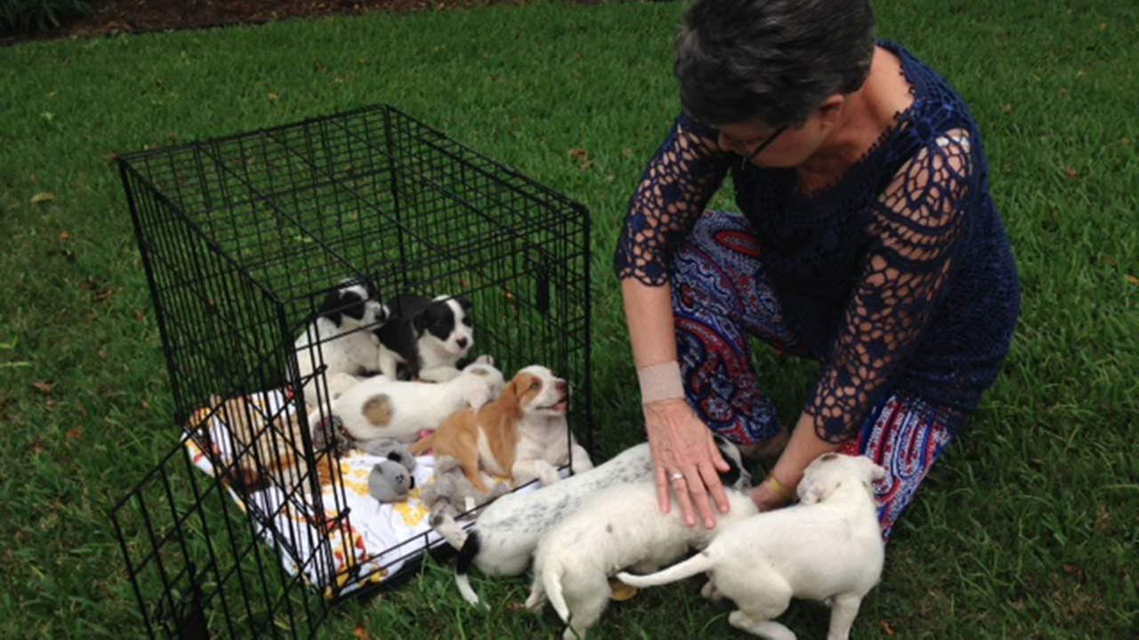 Couple stunned to find 7 puppies abandoned on their Fort Bend County doorstep