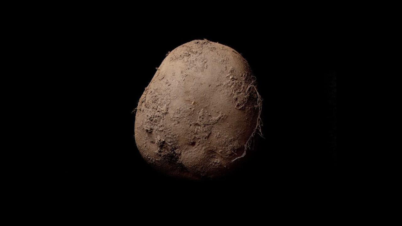 Million-dollar potato photo