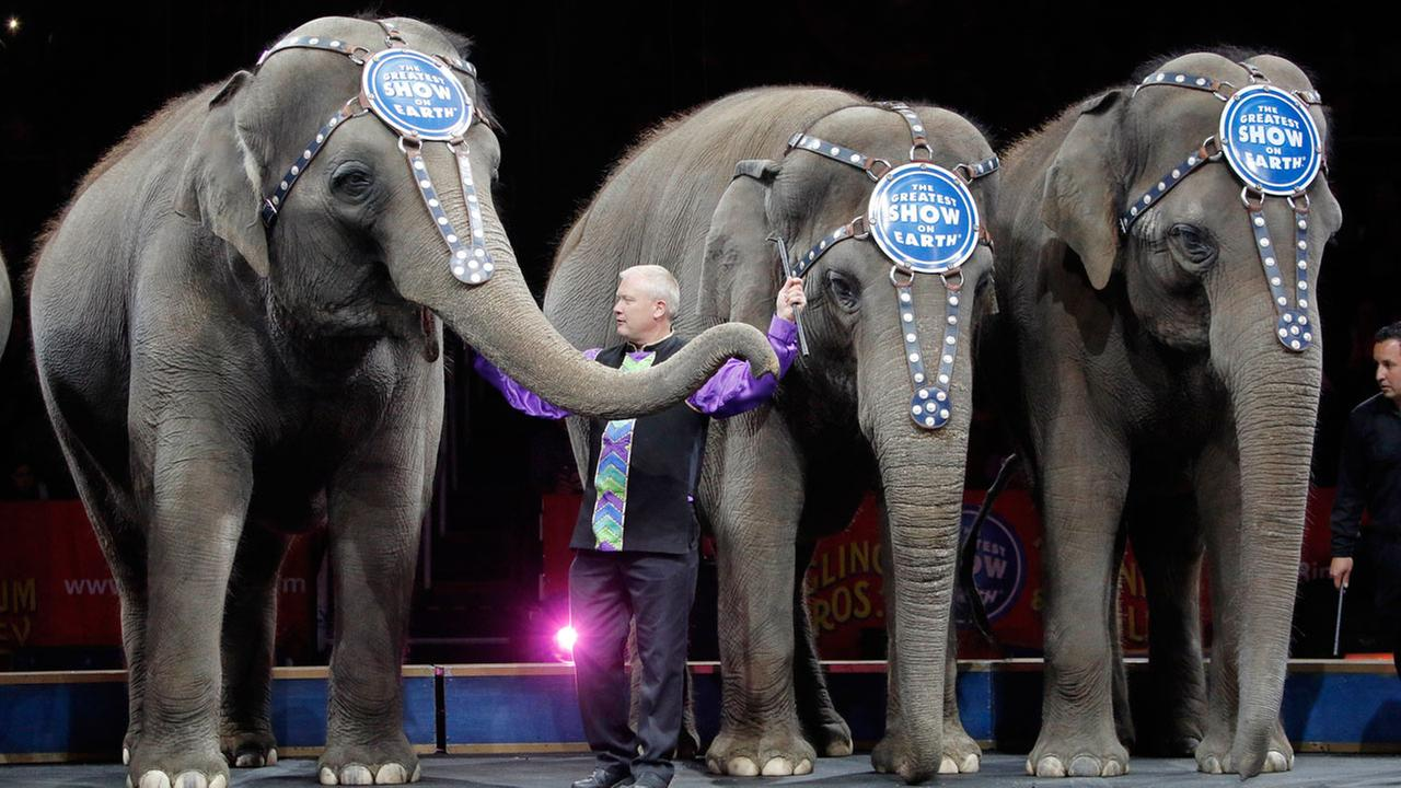 Asian elephants perform for the final time in the Ringling Bros. and Barnum and Bailey Circus Sunday, May 1, 2016, in Providence, R.I.