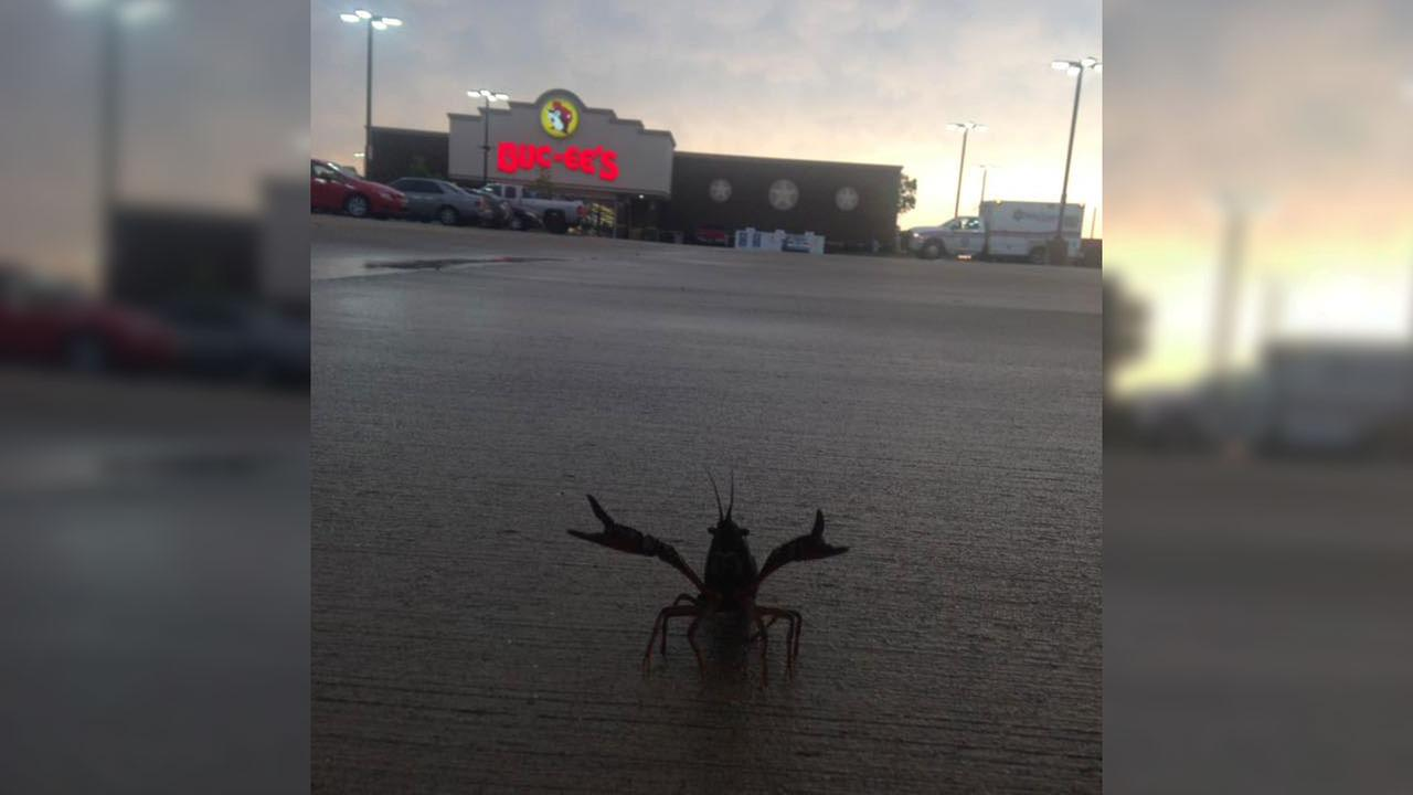 A now-viral Facebook post from Waller depicts a crawfish seemingly making a break for it.