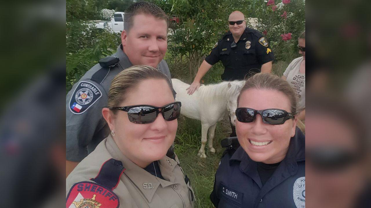 Mini pony rescued from highway in Montgomery Co.
