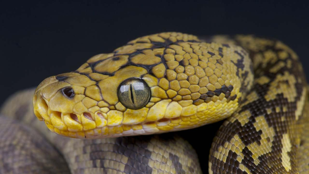 A stock image of a snake