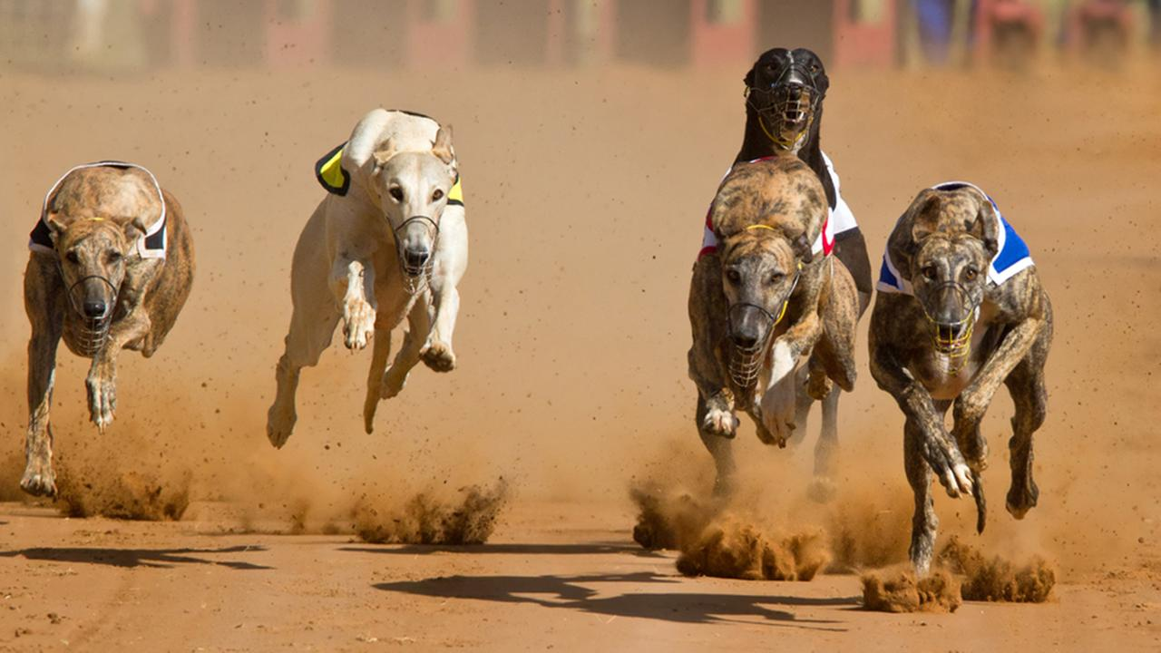 Agreement means dog racing will resume in Texas