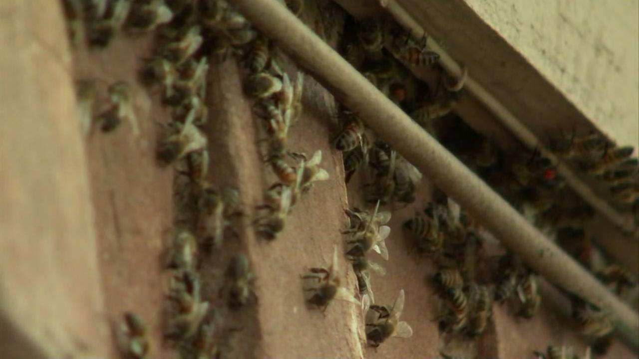 Bees will be removed from elderly couples home