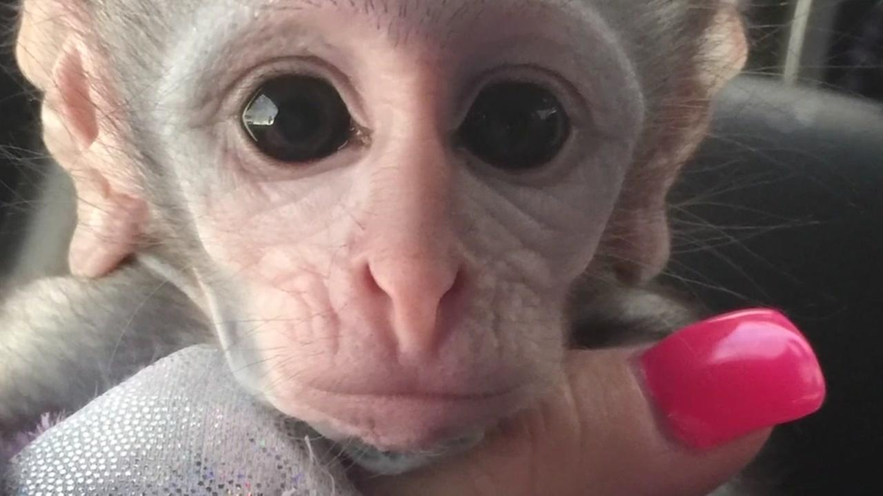 Fake money allegedly used to purchase monkey